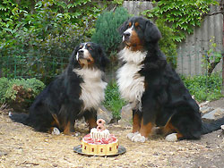 berner birthday